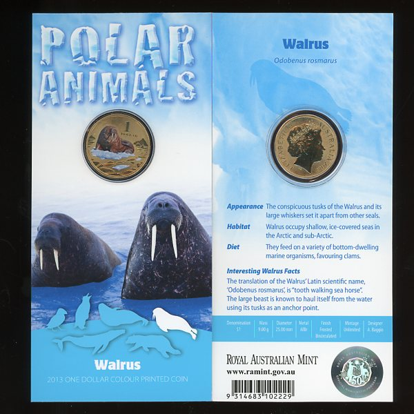 Thumbnail for 2013 Polar Series - Walrus