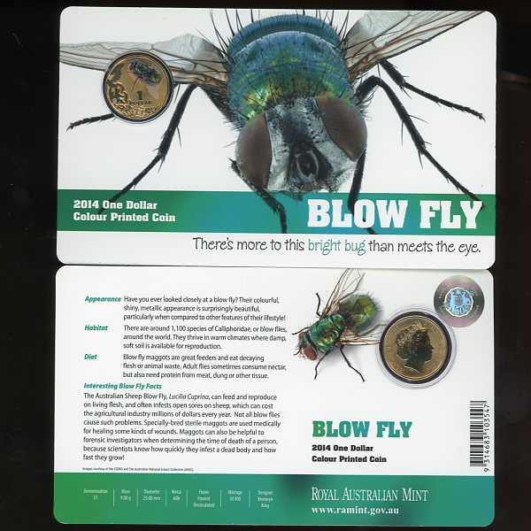 Thumbnail for 2014 Bright Bugs - Blow Fly