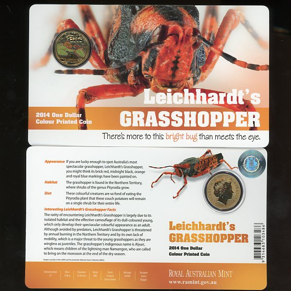 Thumbnail for 2014 Bright Bugs - Leichhardt's Grasshopper