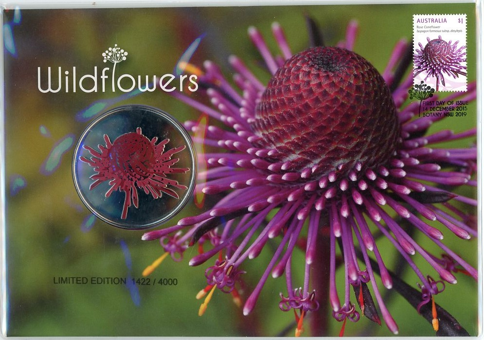 Thumbnail for 2015 Wildflowers - Rose Coneflower PNC