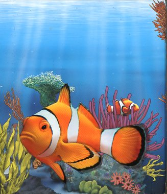 Thumbnail for 2010 Australian Sea Life Half oz Coloured Silverproof - Clown Fish