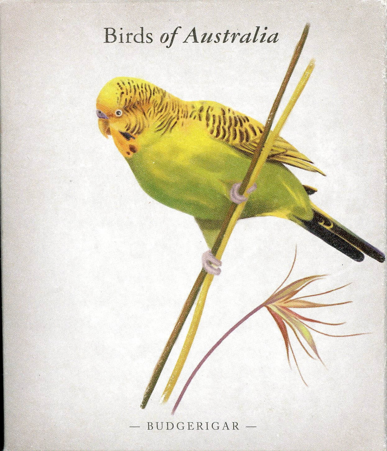 Thumbnail for 2013 Australian Half oz Coloured Silver Proof Birds of Australia - Budgerigar